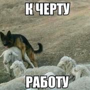 Овчарка и овца